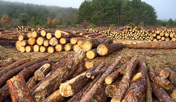 Probosque urge a realizar operativos en Edomex vs la tala clandestina
