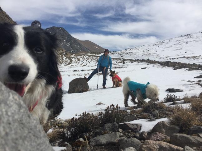 Razones para no llevar a tu perro al Nevado de Toluca y zonas montañosas