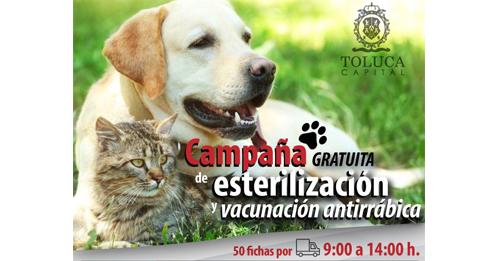 Calendario esterilización y vacunación antirrábica gratuita en Toluca