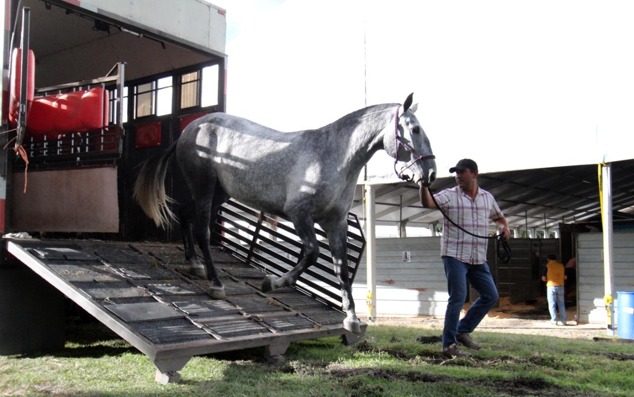 Arriban bellos ejemplares al Festival Internacional del Caballo Lusitano en Toluca