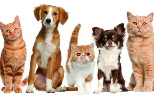¿Dónde estará la campaña gratuita de esterilización canina y felina esta semana?