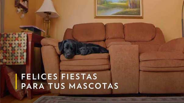 """""""Felices fiestas para tus mascotas"""" es el lema que enmarca este programa especial."""