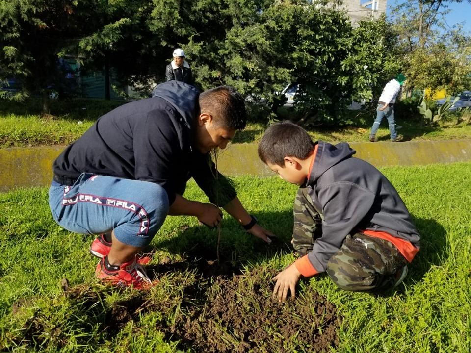 árboles plantados en Toluca