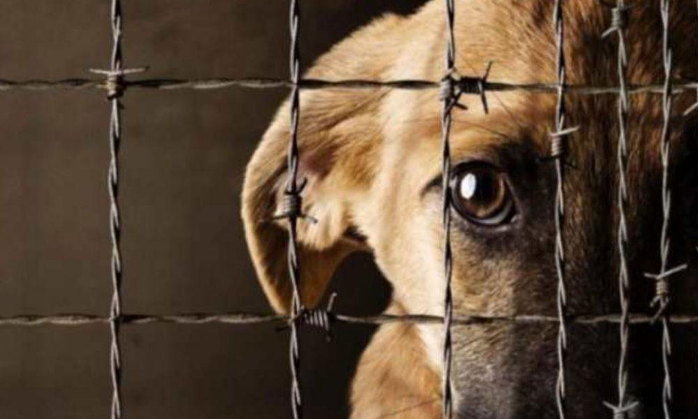Mexico ocupa el tercer lugar en maltrato animal