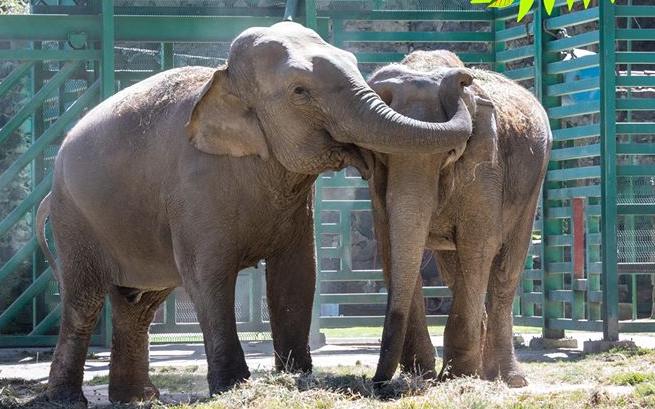 Grandes cuidados del Parque Ecológico Zacango para animales de gran tamaño