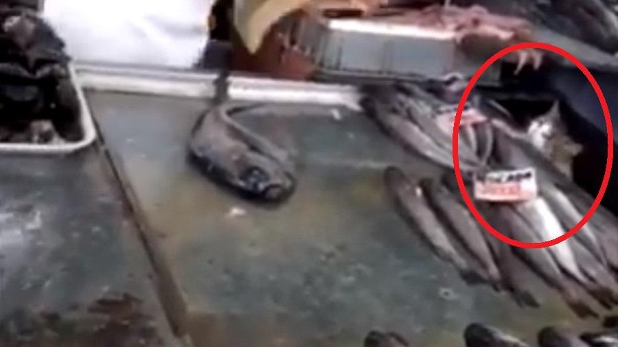 gatito se roba pescado en central de abasto
