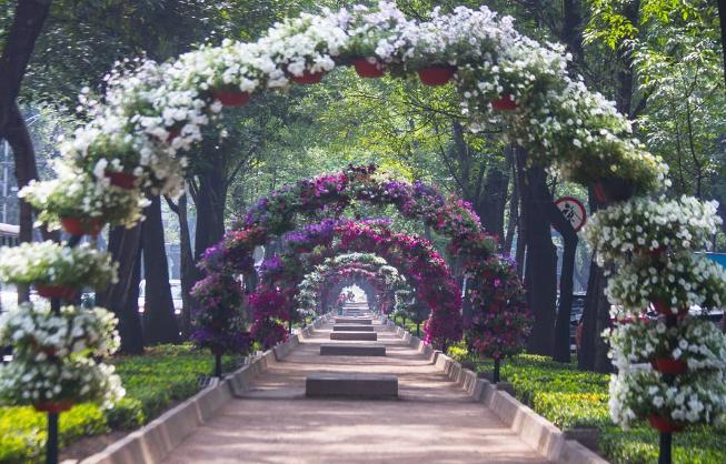 Se acerca el Festival Flores y Jardines 2020