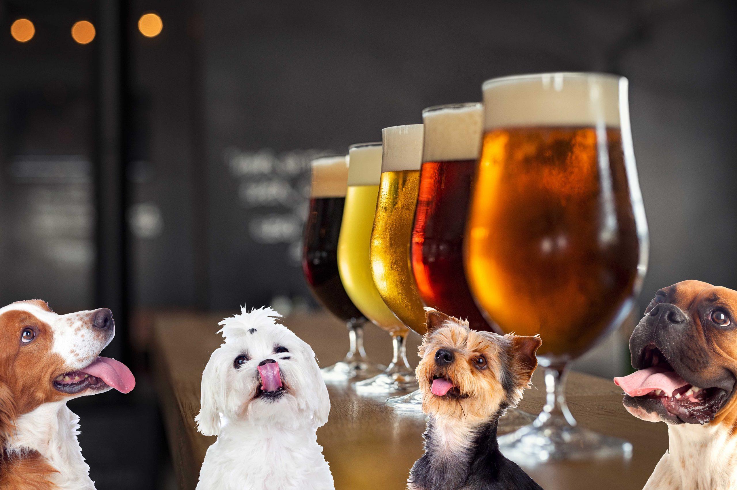 Empresa te regala 3 meses de cerveza si adoptas un perrito