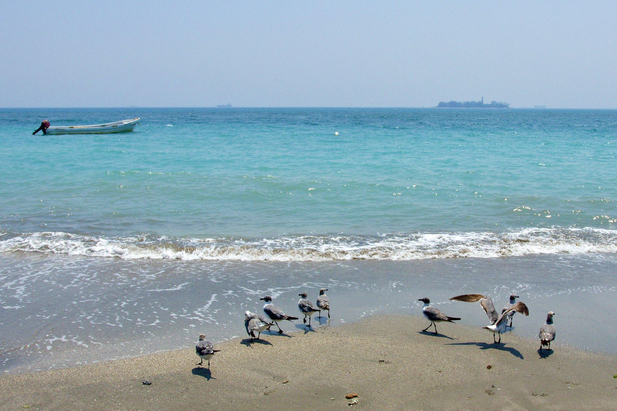 Playas de Veracruz se pintan de azul turquesa
