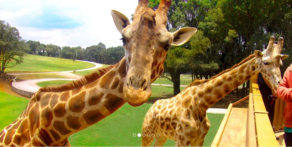 Bio Parque Estrella pide ayuda para cuidados de más de 2 mil ejemplares