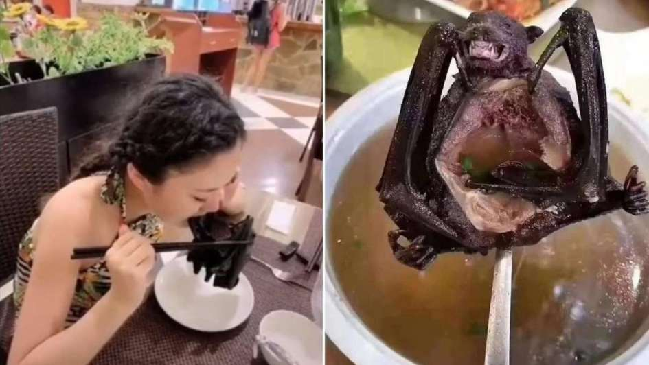 Ciudad China prohibe comer animales «exóticos»