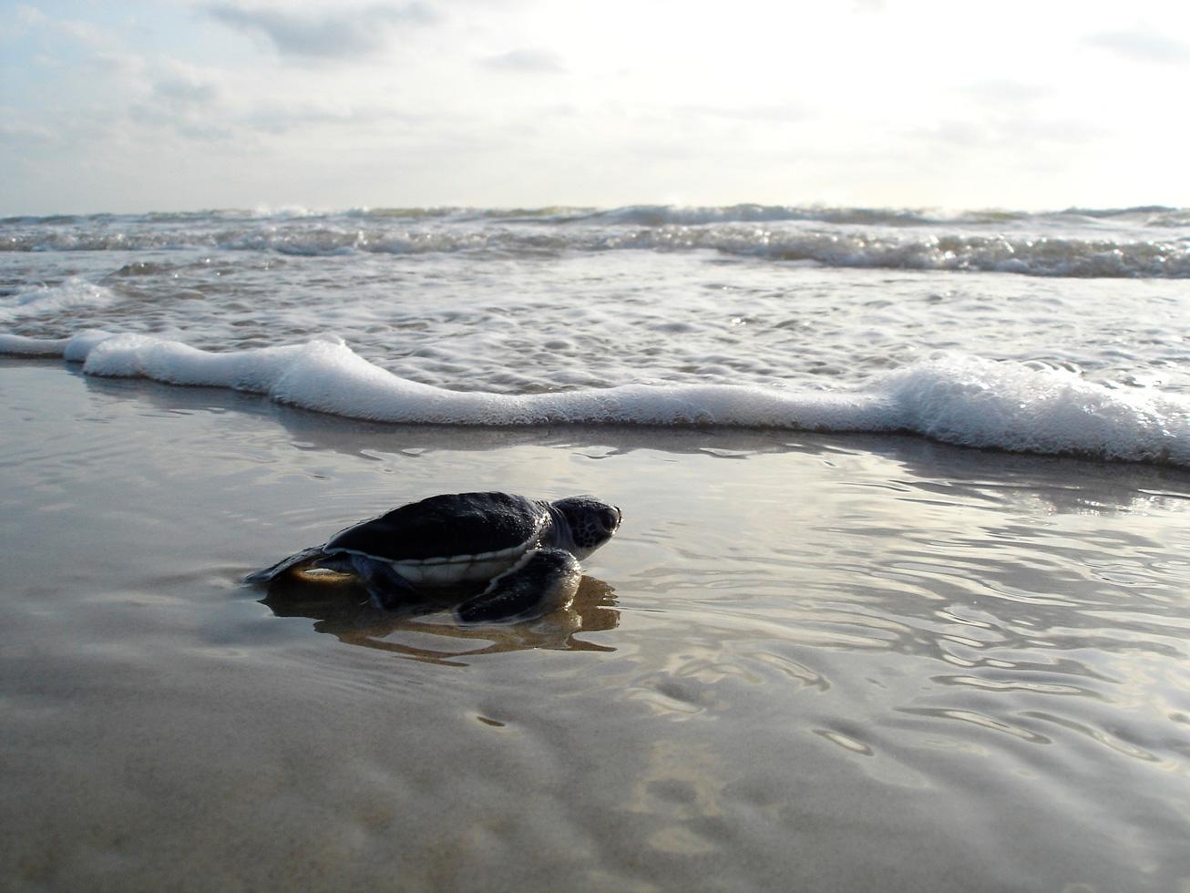 Recopilación de animales vistos en ciudades vacías, hay uno en Cancún 🐢😍   VIDEOS