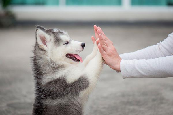 Adopta una mascota desde la comodidad de tu casa 1