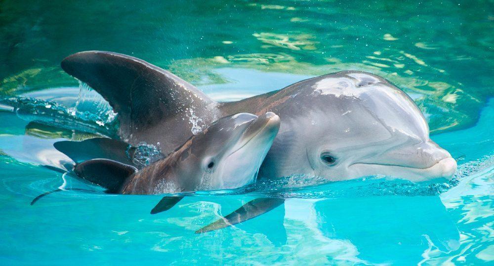 Delfines jugando en playas de Veracruz