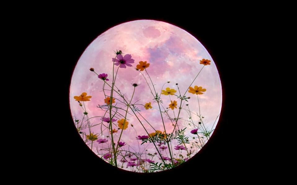 """Disfruta este jueves de la increíble """"luna de flores"""""""