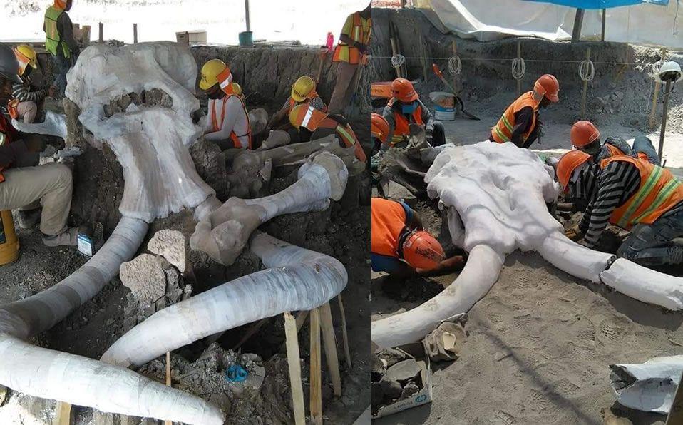 Hallan más de 60 restos de mamuts en Santa Lucía