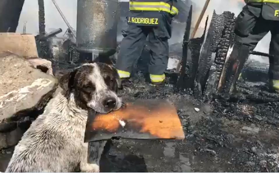 perrito llora al ver su casa destruida en un incendio