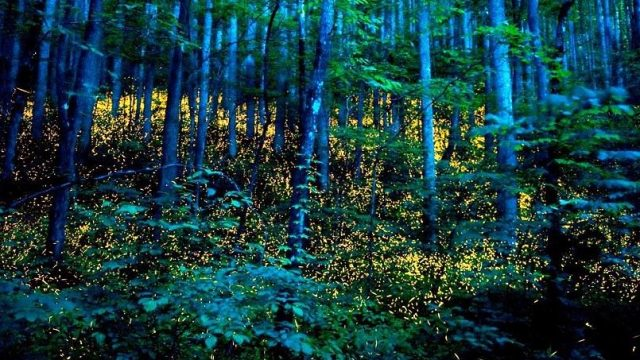 Arriba brillante espectáculo de luciérnagas al EdoMéx