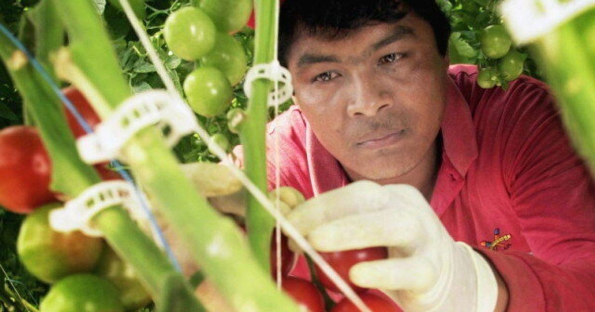 México no mandará trabajadores a granjas canadienses con brotes de COVID-19