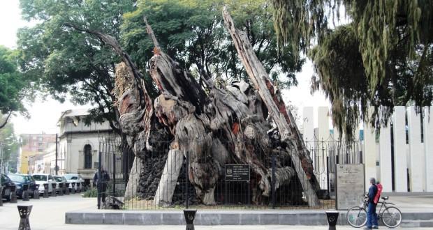 """500 años del día en que Hernán Cortés llorara bajo el """"árbol de la noche triste"""""""