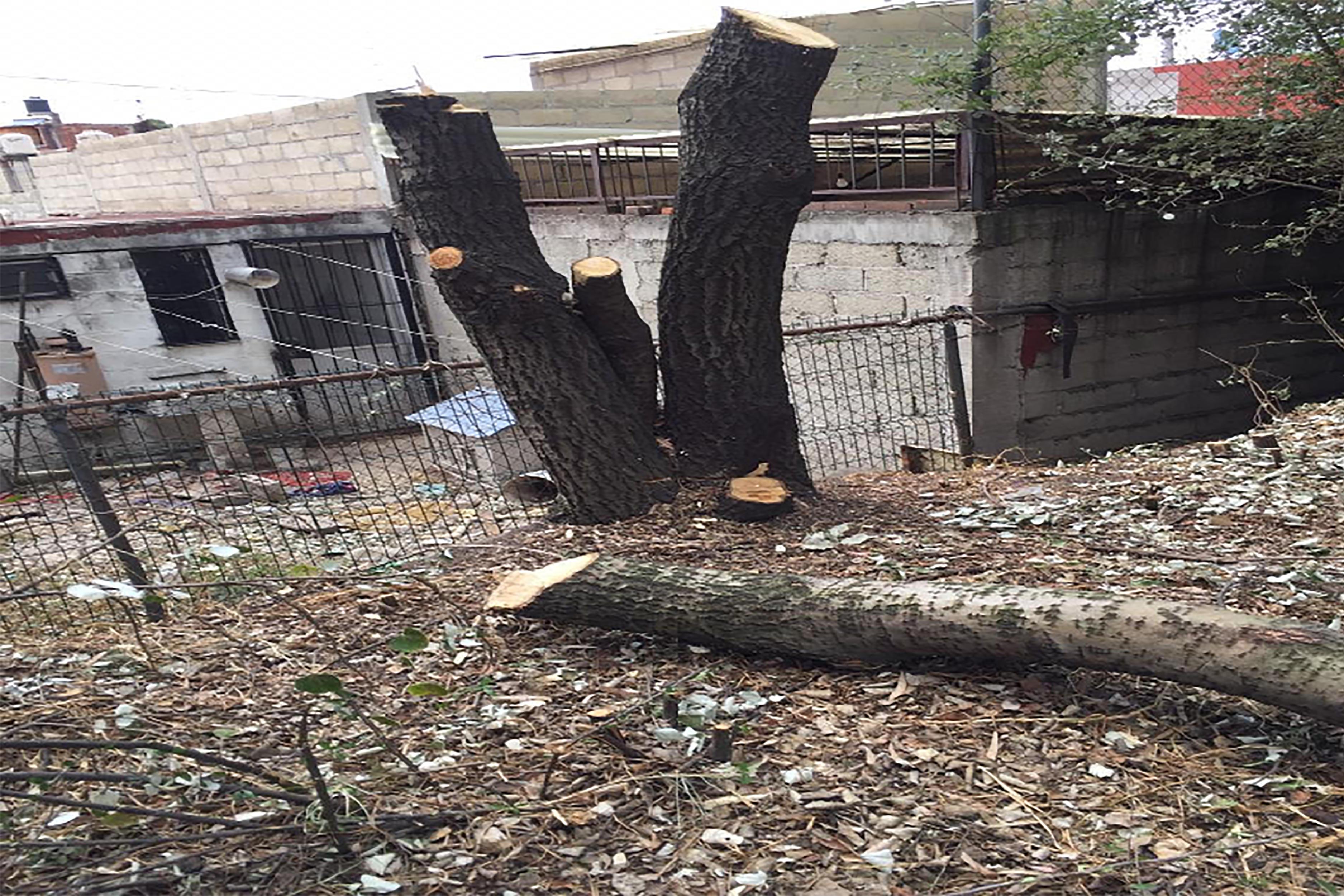 Podan árboles de manera arbitraria en delegación de Toluca    Fotogalería