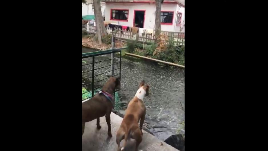 (Video) Peces de Xochimilco saltan del agua antes del sismo del pasado martes