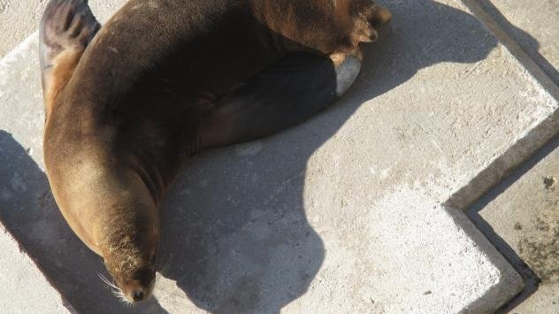 piden-cierre-de-zoologico-por-abandono-y-maltrato-animal