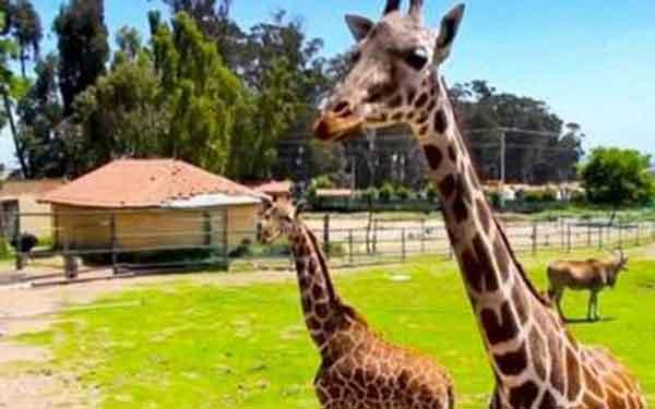 Qué Parques y Zoológicos del Edomex abrirán este 23 de junio