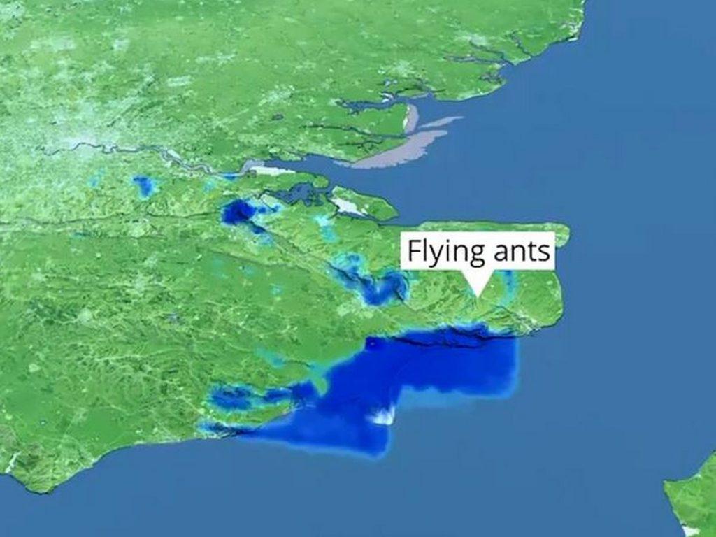 Lluvia de hormigas voladoras se acerca a Reino Unido