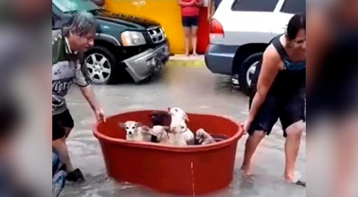 Salvan-a-sus-7-perritos-del-huracán-Hanna