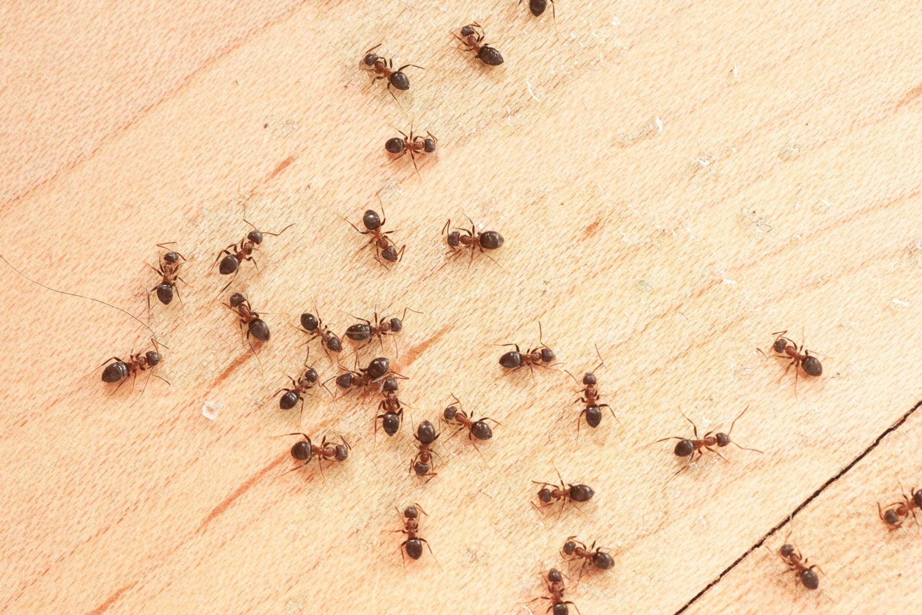 Estos son los insectos más peligrosos de la tierra
