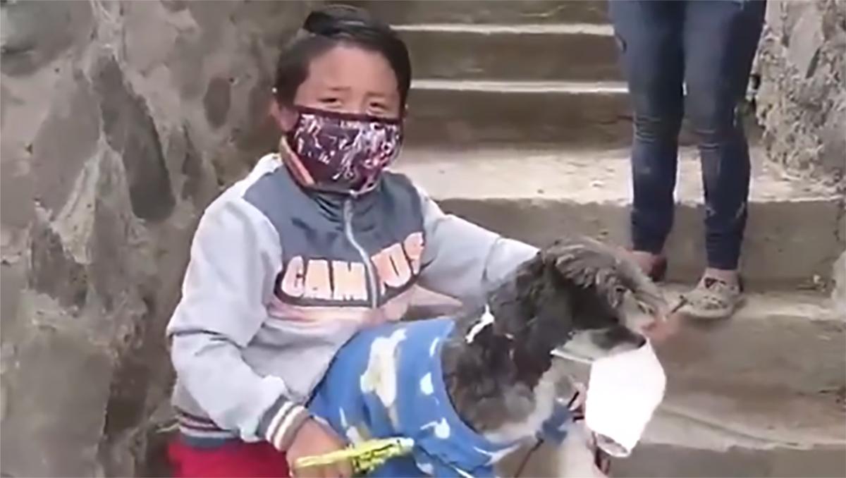 nino-protege-a-su-perrito-con-cubrebocas-para-ir-a-comprar-y-se-vuelve-viral5