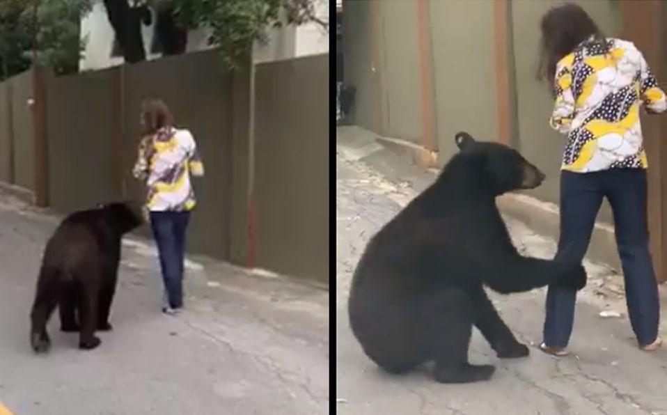(Vídeo) Oso es captado en calle de Monterrey caminado detrás de una mujer