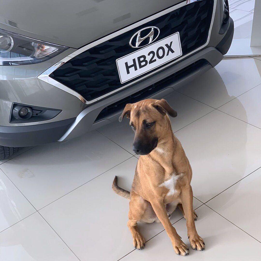Agencia-de-autos-adopta-a-perrito-callejero-y-se-vuelve-viral2.jpg
