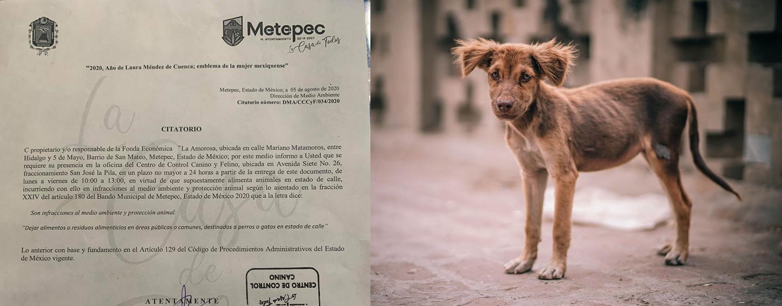 ¿En Metepec sancionan por dar de comer a los perros callejeros?