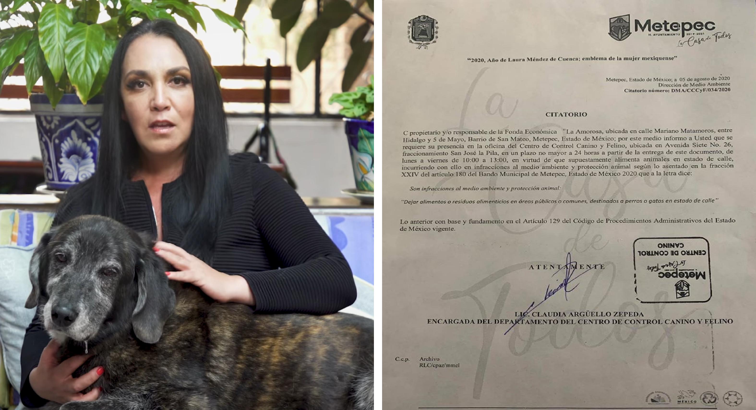 Metepec Pese a exigencias e incongruencias brindarán protección a animales