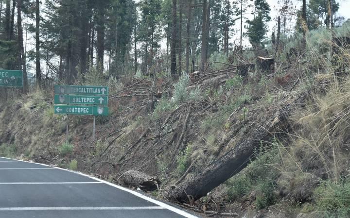 Señalan la gran tala clandestina en Nevado de Toluca y otras zonas forestales del EDOMEX