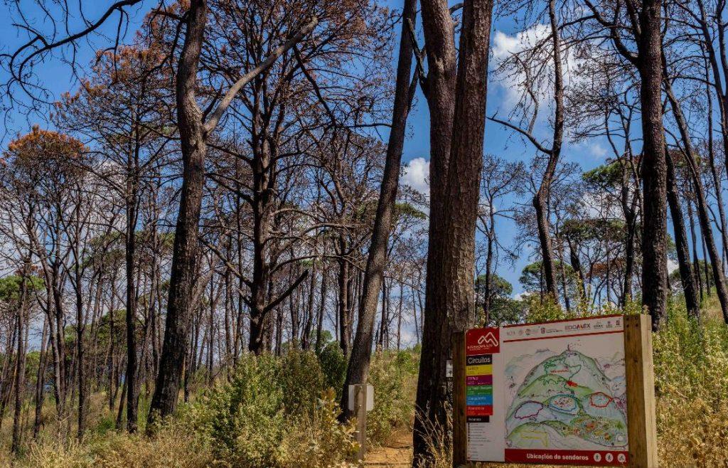 Señalan la gran tala clandestina en Nevado de Toluca y otras zonas forestales del EDOMEX4