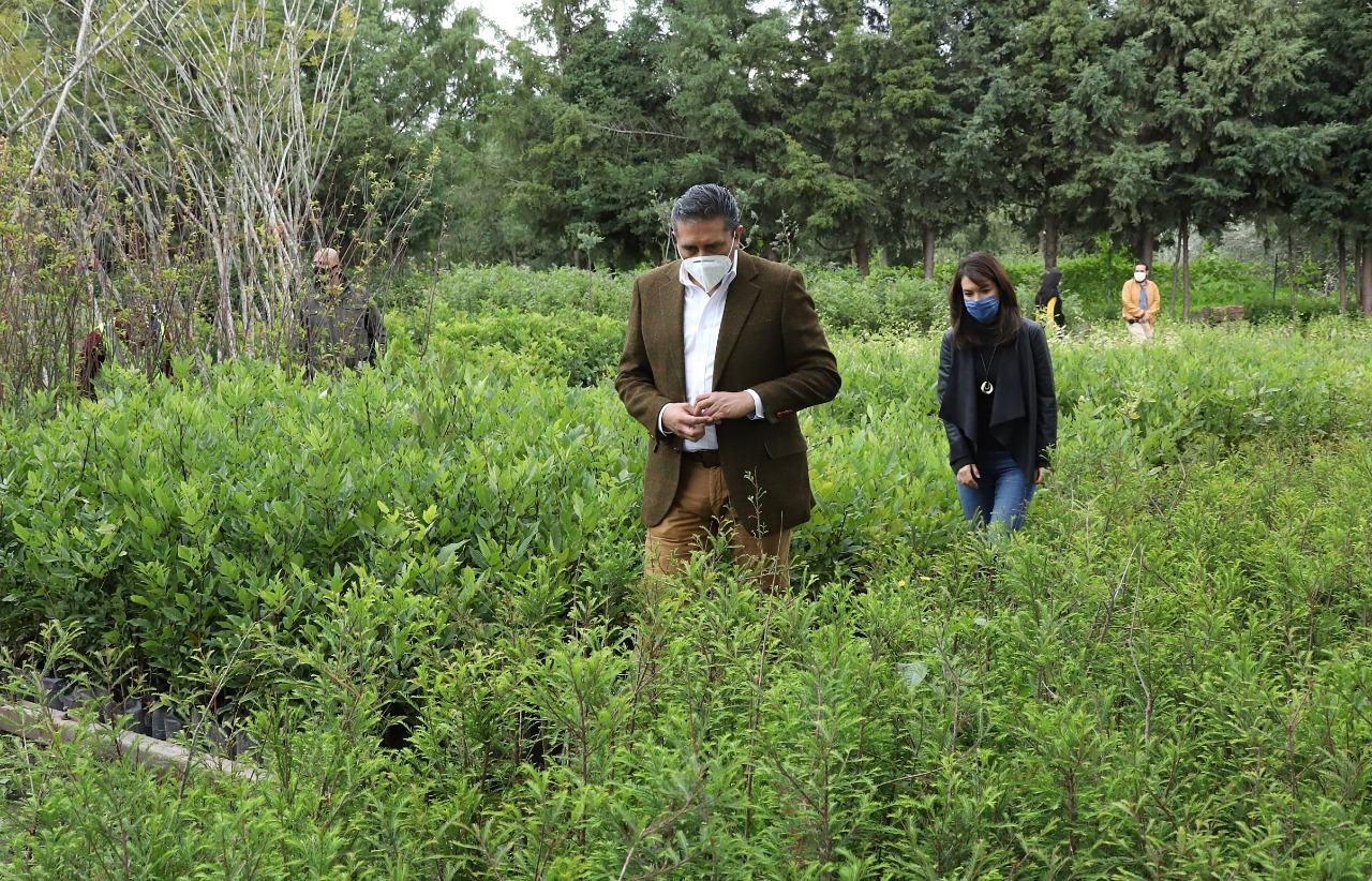 400-mil-plantas-y-arboles-son-establecidas-en-toluca-la-meta-es-de-1-8-millones