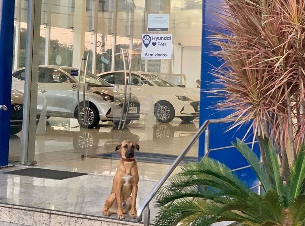 Agencia de autos adopta a perrito callejero y se vuelve viral