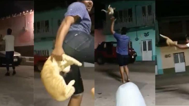 jovenes-por-maltratar-a-un-gato-haran-servicio-comunitario2