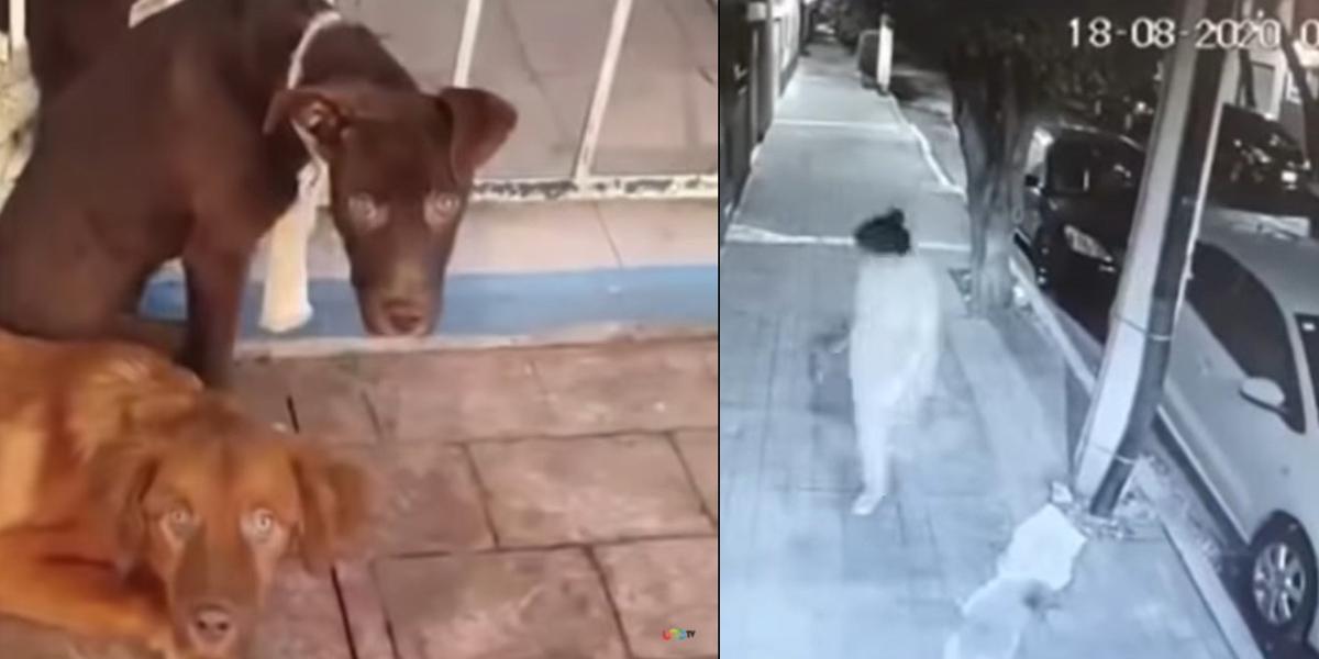 VIDEO    Arrastró y abandonó perritos en la colonia Popotla