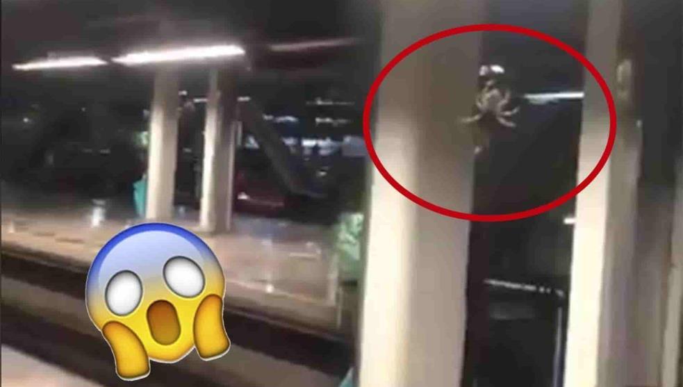 Arana-gigante-se-aparece-en-estacion-del-metro