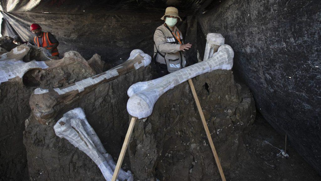 El mayor cementerio de mamuts del mundo se encuentra México