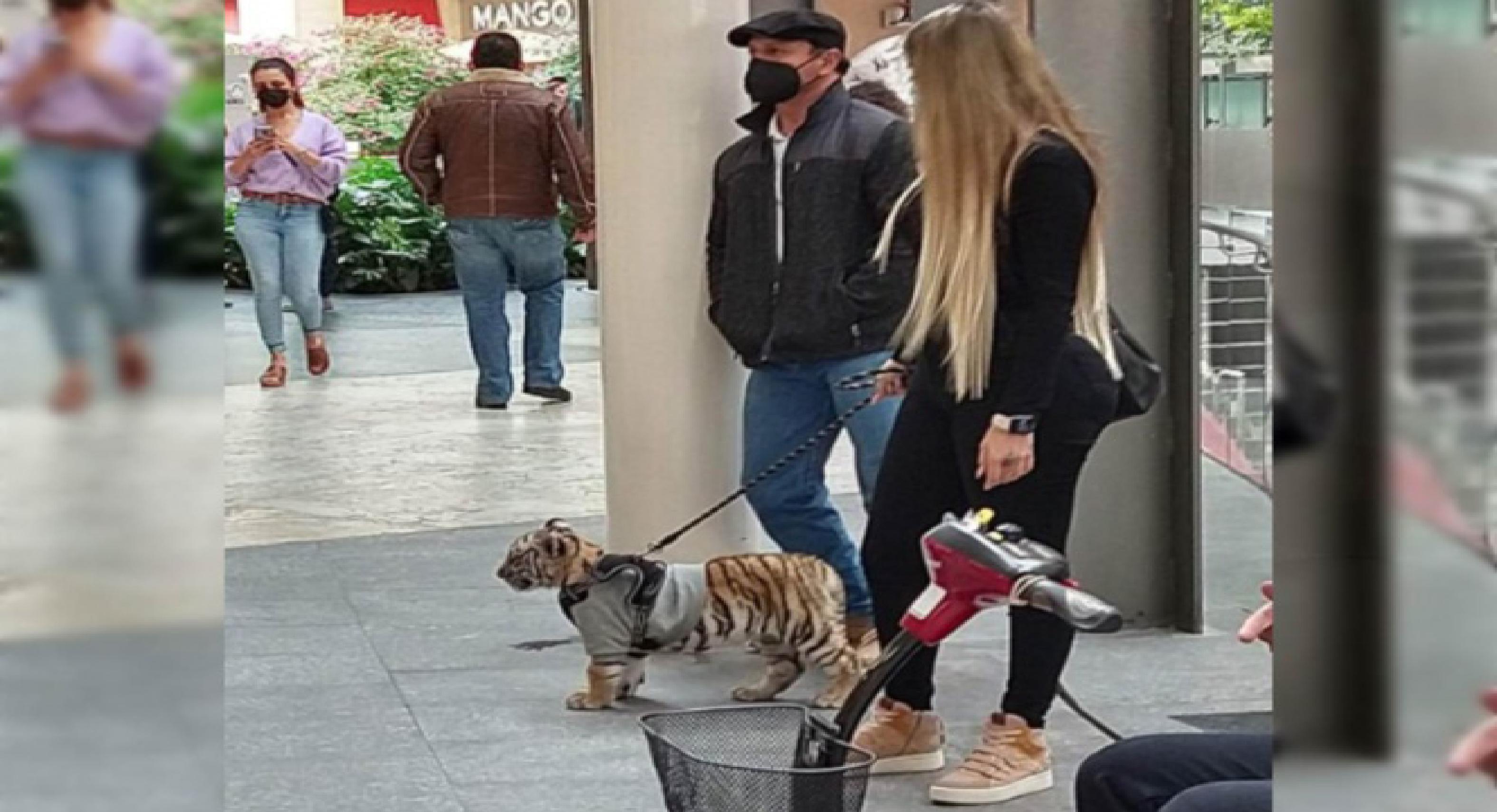 Mujer paseaba en una Plaza de Polanco a un cachorro de tigre