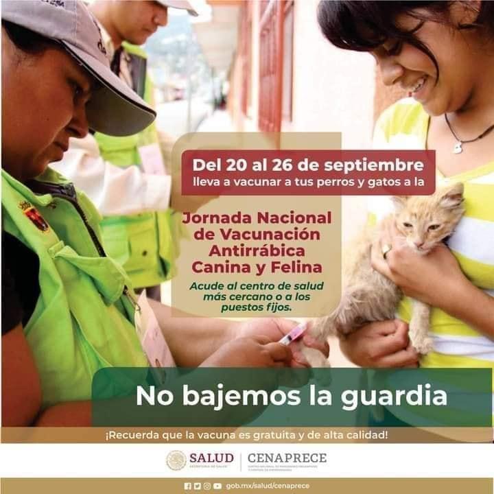 donde-estaran-puestos-vacunacion-para-perros-gatos-toluca-edomex-160494