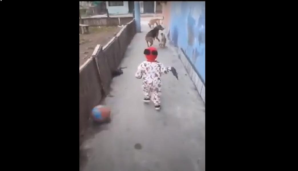 (Video) Niño juega con sus perros y una pelota aparece de la nada