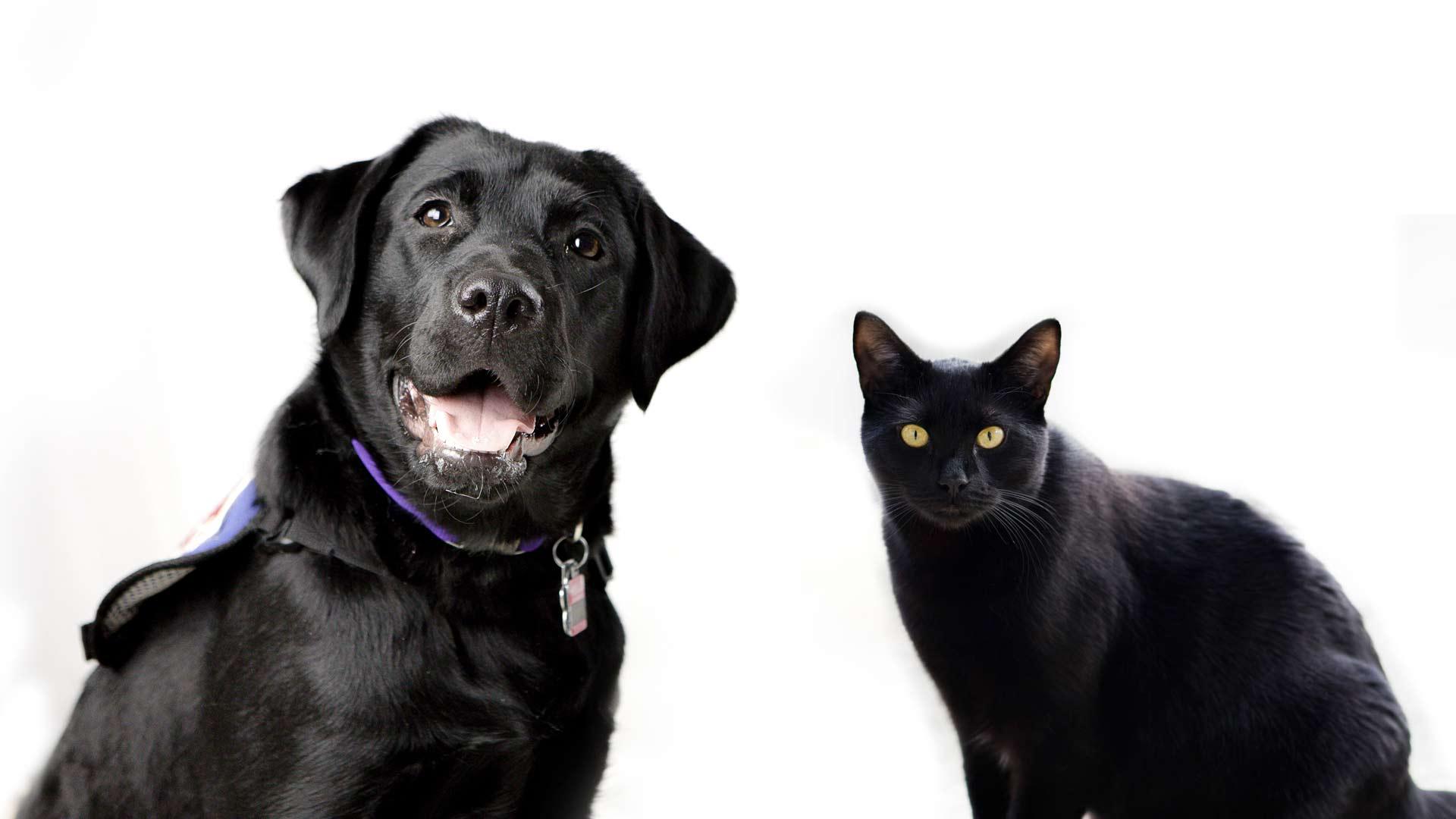 piden-no-dar-en-adopcion-a-perros-y-gatos-en-octubre-por-rituales-160494