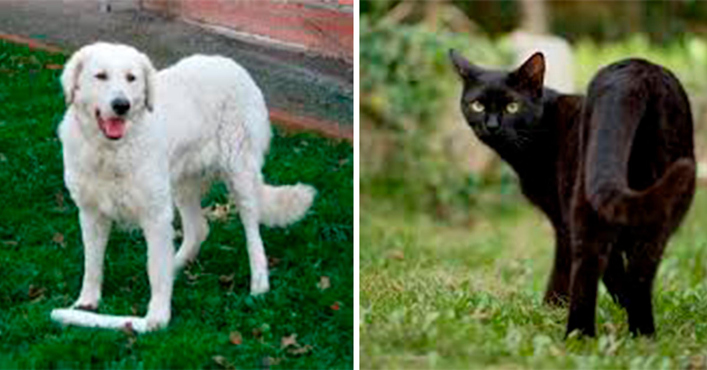 piden-no-dar-en-adopcion-a-perros-y-gatos-en-octubre-por-rituales6