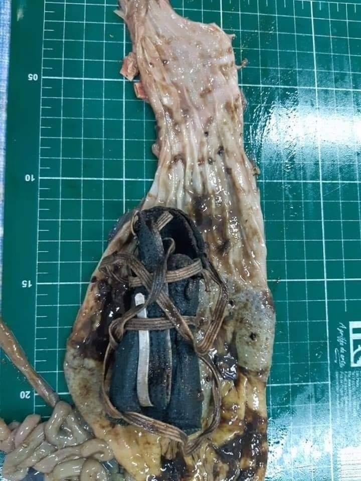 pinguino-pierde-la-vida-por-ingerir-mascarilla-n95-2